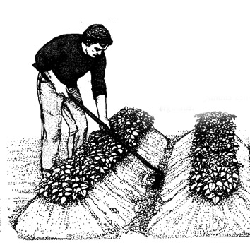 aporcado patatas
