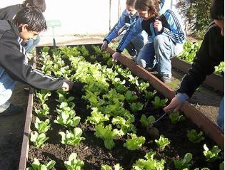 Huerto escolar que sembrar en un huerto escolar felix - Que plantar en el huerto ...