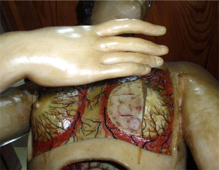 venus anatómica11