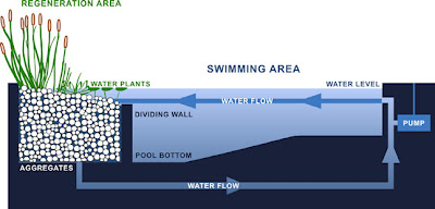 Huerto familiar c mo transformar una piscina for Limpiar filtro piscina